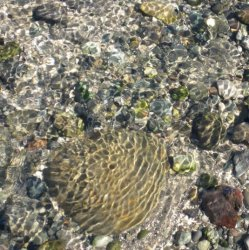 Hornby Island Tide Pools Sharon Colling