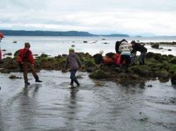 inter-tidal zone