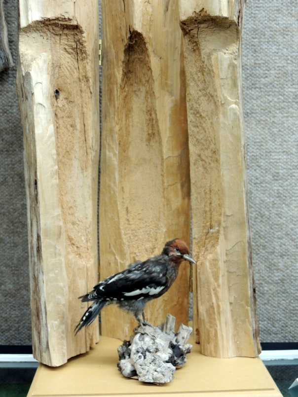 Inside the hairy woodpecker nest on which hinges have been installed.