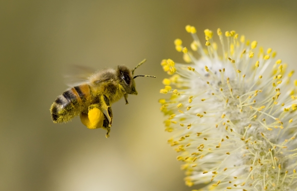 pollinator event