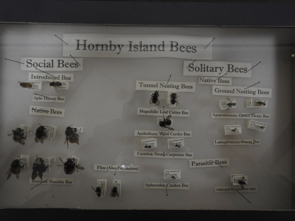 Hornby Island Bees