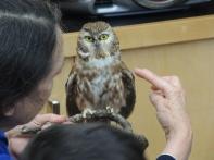 owl_bat2