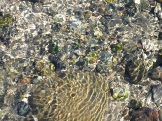 hornby-island-tide-pools-sharon-colling.jpg