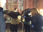 Cleaning the eagle. Neil, Rachelle, Susan, and Kasey.