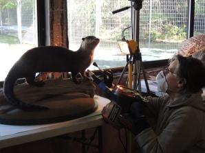 Rachelle cleans the otter.
