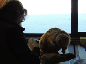 Susan cleans the beaver.