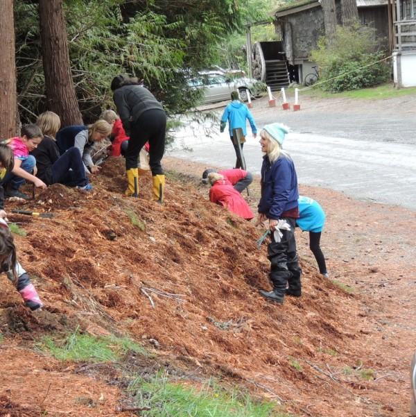Students plant bulbs along Sollans Rd.