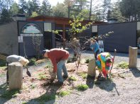 Stewards prepare the landscaped plot outside the school for planting bulbs.