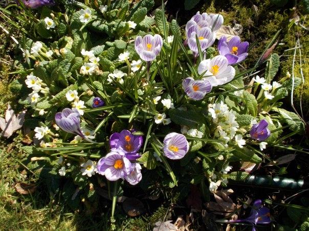 Tina's garden.jpg